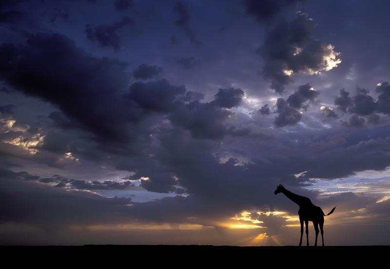 Favorites-15_Giraffe-Sunset