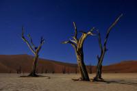 Landscape-22_NAM_SOS_110612_4392