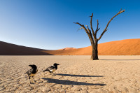 Namibia-44_08D7478