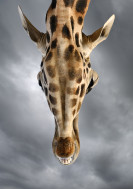 Wildlife-11_SPA_CAN_101014_653