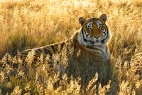 Wildlife-25_SA_120610_6887