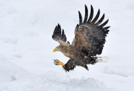 Wildlife-36_JAP_RAU_110218_571