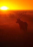 Wildlife-48_NAM_ETO_110609_4041