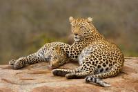 Wildlife-66_SA_SABI_20090802_5592