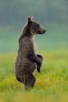 Wildlife-67_AL_KAT_100808_4263