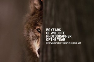 50 Years of WPY