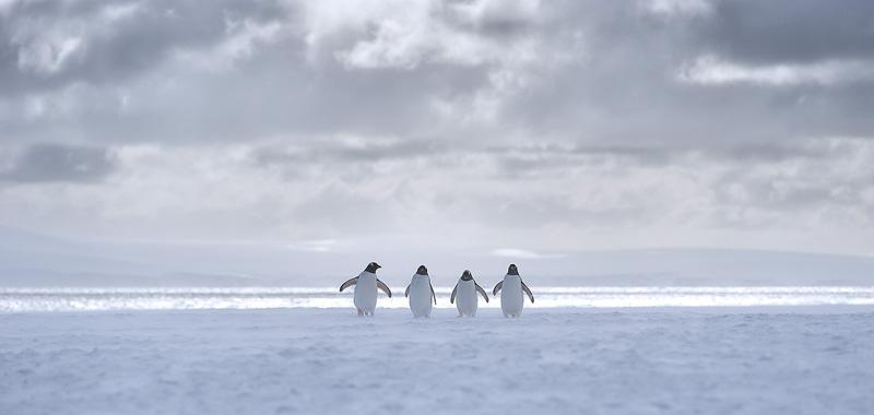antarctica-19
