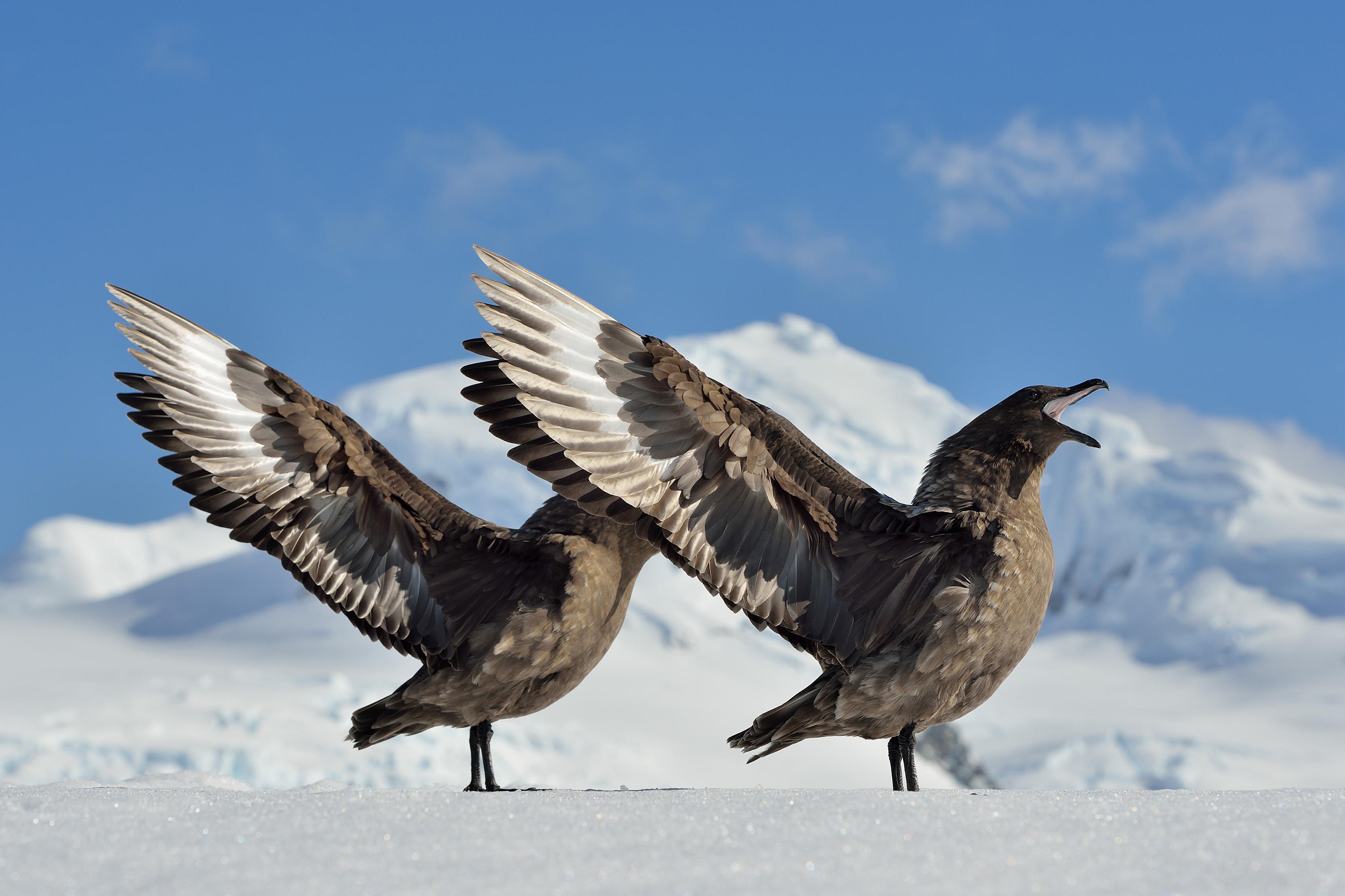 самых птицы антарктиды с названиями этой самсы получается