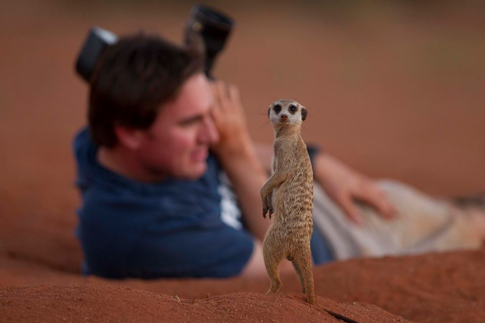 A meerkat in the Kalahari Desert of South Africa