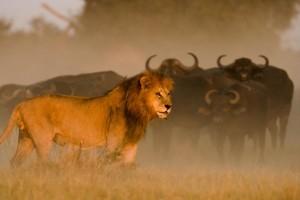 Duba-wildlife10-1024x682