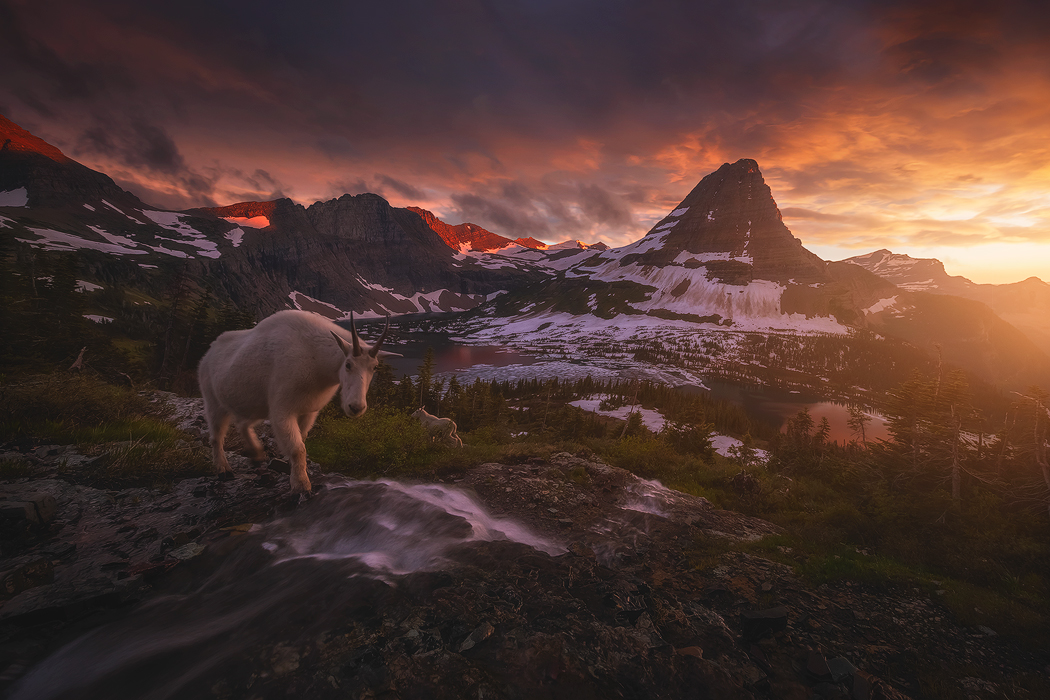 A stormy evening shared with mountain goats in Glacier National Park.