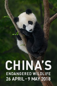 China's Endangered Wildlife tour