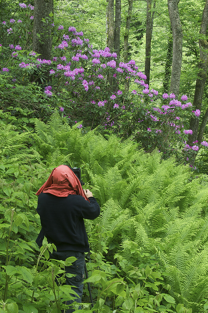 photographing rhododendron in Georgia, Europe